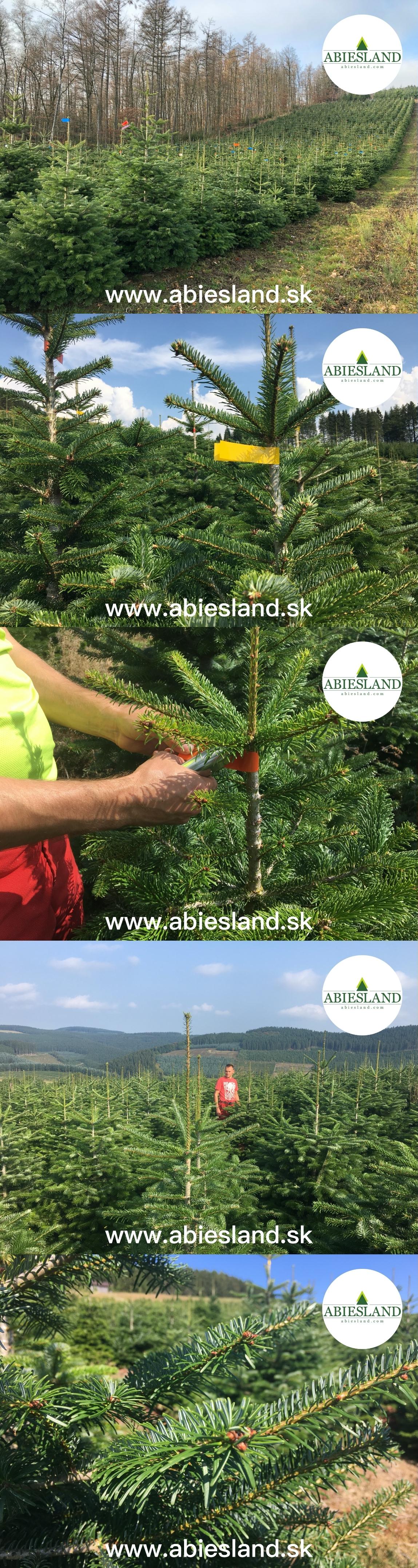 www-abiesland-sk.jpg